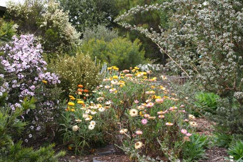 Inverawe native gardens for Australian native garden design